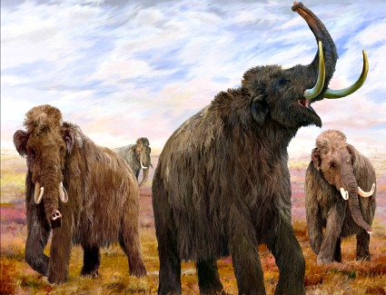 Mammoths Ice Age Giants at the Natural History Museum, London