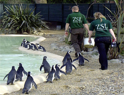 Book a hotel near London Zoo