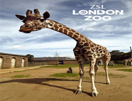 Book A Hotel Near Regents Park And London Zoo