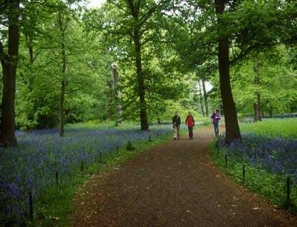 Kew Gardens Exotic Plants Treetop Walkwayusic Gigs